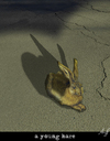 Cartoon: end of... (small) by Anjo tagged duerer,hase,hare,end,dead,asphalt,car,auto,street,strasse