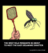 Cartoon: Culiseta longiareolata (small) by perugino tagged mosquito,insects,animals