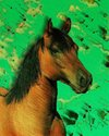 Cartoon: Horse (small) by Barcarole tagged horse