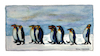 Cartoon: King Penguins (small) by Pascal Kirchmair tagged königspinguine,manchots,royaux,pinguine,king,penguins,watercolour,aquarell,pascal,kirchmair,pinguinos,reales,illustration,drawing,zeichnung,cartoon,caricature,karikatur,ilustracion,dibujo,desenho,ink,disegno,ilustracao,illustrazione,illustratie,dessin,de,presse,du,jour,art,of,the,day,tekening,teckning,aquarelle,watercolor,acquarello,acuarela,aguarela,aquarela,painting,malerei,peinture,dipinto,pintura,pittura,cuadro,quadro