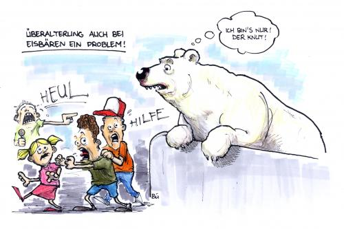 Knut Cartoon