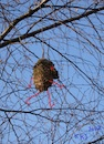Cartoon: Walks in the branches (small) by Kestutis tagged observagraphics,kestutis,lithuania,nature,bird,nest