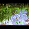 Cartoon: MoArt Something in the Water 16 (small) by MoArt Rotterdam tagged tags rotterdam moart moartcards reflectie reflection water weerspiegeling riet