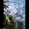 Cartoon: MoArt Something in the Water 17 (small) by MoArt Rotterdam tagged tags,rotterdam,moart,moartcards,reflectie,reflection,water,weerspiegeling,riet