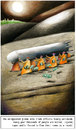 Cartoon: unregulated_global_arms_trade_1 (small) by firuzkutal tagged norway,arm,armtrade,armstrade,firuzkutal,global,fish,sea,ocean,worldwide