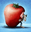 Cartoon: BODO Magazin - Erdbeerbodo (small) by volkertoons tagged volkertoons cartoon illustration bodo ratte rat erdbeere strawberry obst frucht fruit
