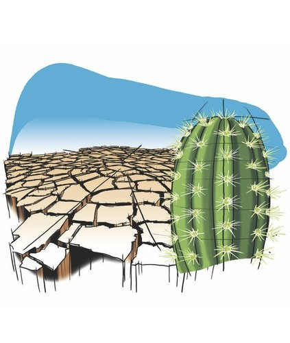 Cartoon: Waterless (medium) by Alexandru Ifrim tagged cactus,waterless,deseer,illustration,earth