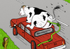 Cartoon: Low Carbon 2 (small) by Dadaphil tagged cow,dadaphil,car,green,environement,kuh,auto,co2,grün,umwelt