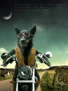Cartoon: Route sixtysix (small) by fantasio tagged easy,rider,wolf,lonesome,biker,harley,route,66,kult,anthro