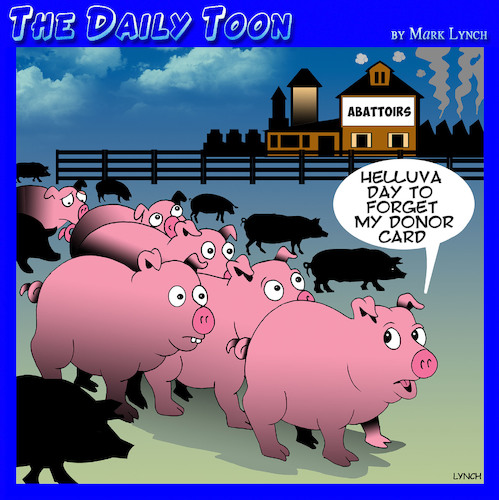 Cartoon: Donor card (medium) by toons tagged abattoir,pigs,organ,donors,slaughter,house,animals,meats,processed,foods,ham,bacon,abattoir,pigs,organ,donors,slaughter,house,animals,meats,processed,foods,ham,bacon