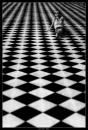Cartoon: Game of Life (small) by BenHeine tagged game of life thomas moore poem in the morning chess echecs jeux black and white marta smile unknown paris versailles happiness mystery past perspective pleasure woman faith sorrow love amour tender freshness ben heine hubert lebizay square carre geometry