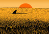 Cartoon: a sea of wheat (small) by Medi Belortaja tagged sea,field,sunshine,wheat,shark,danger,paradox,humor
