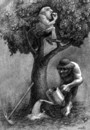 Cartoon: boss and worker (small) by Medi Belortaja tagged tree,boss,worker,rich,poor,people,apples,fruits,capitalism