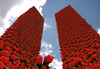 Cartoon: Twin Flowers (small) by Medi Belortaja tagged twin,towers,flowers,buildings,poppy,esteem,remembrance,terror,terrorism,11,september,anniversary