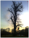 Cartoon: Am alten Baum (small) by edda von sinnen tagged caspar,david,friedrich,homage,old,tree,alter,baum,composing,cartoon,edda,von,sinnen,zenundsenf,zensenf,zenf,illustration