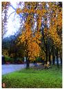Cartoon: Goldregen - golden rain (small) by edda von sinnen tagged goldregen,golden,rain,herbst,autumn,penner,poor,man,povery,armut,edda,von,sinnen