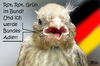 Cartoon: Rot Rot Grün (small) by besscartoon tagged rot,grün,bund,bundestagswahlen,deutschland,bundesadler,wahlen,koalition,bess,besscartoon